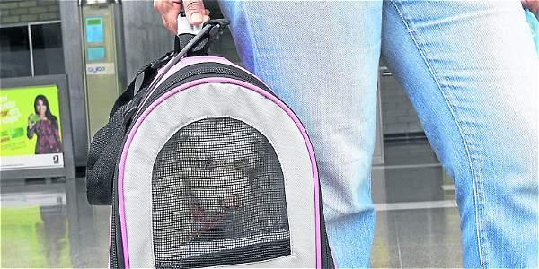Amplían los RAC para transportar mascotas