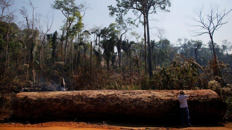 Países ricos promueven la deforestación de bosques tropicales, según estudio