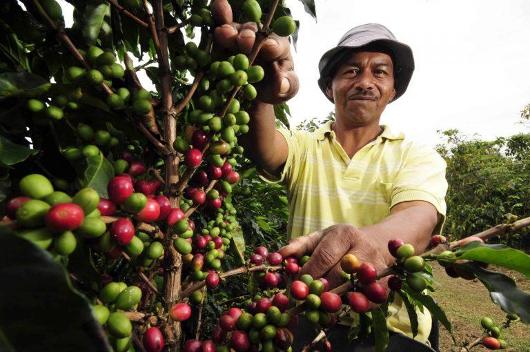 Tigo y la Federación Nacional de Cafeteros crean alianza para conectar a las familias cafeteras