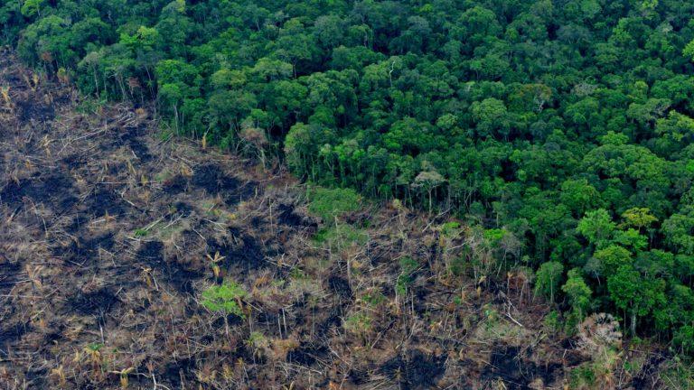 La deforestación y el tráfico de fauna en Colombia serían delitos ambientales