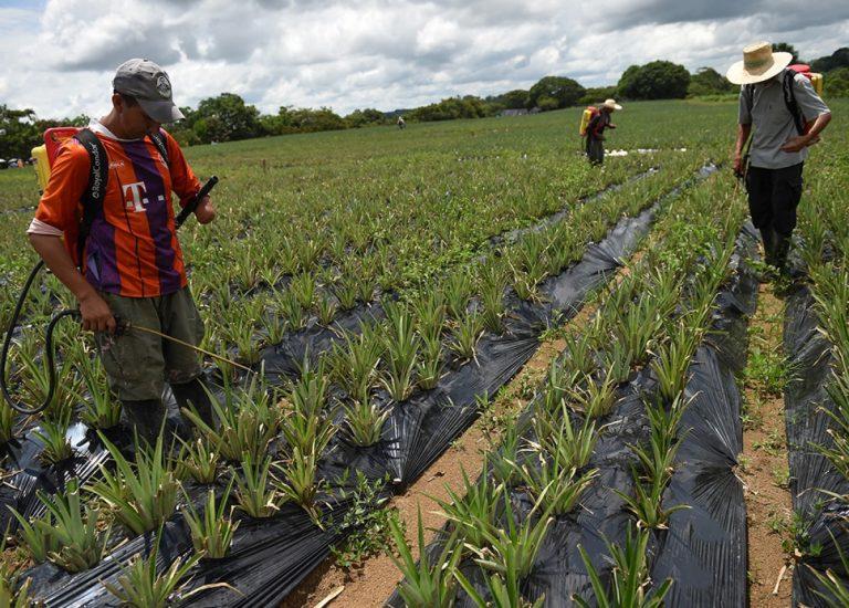 Gobierno expidió decreto para que excombatientes tengan acceso a tierras