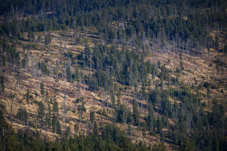 Frenar la deforestación: el gran reto ambiental de Colombia para 2021