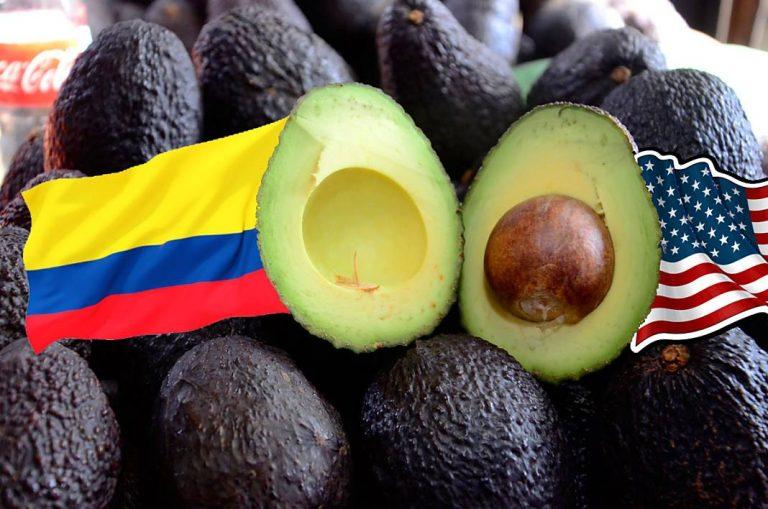 Colombia exportará más de 43 toneladas de aguacate Hass para el Super Bowl XL