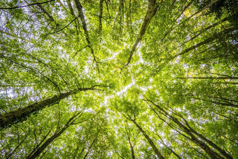 Grupo Epm ha sembrado 11,7 millones de árboles como parte de la meta nacional