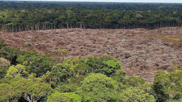 En 2020, la Amazonía perdió 2,3 millones de hectáreas