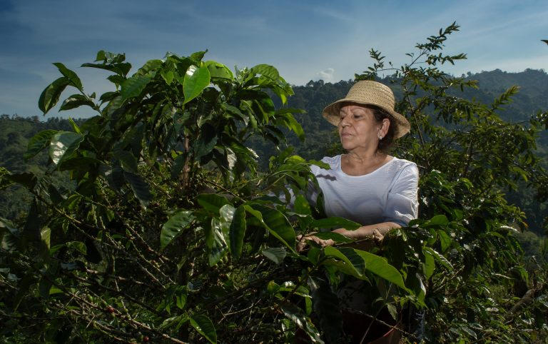 En Abejorral se puede tomar café local libre de impuesto de Industria y Comercio