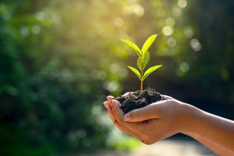 El Grupo Argos sembrará 125.000 plantas para recuperar manglares