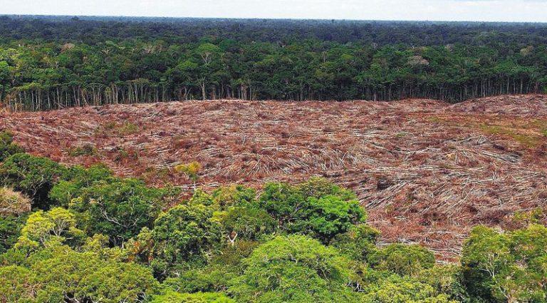Fiscalía creará una unidad para combatir crímenes ambientales en Colombia