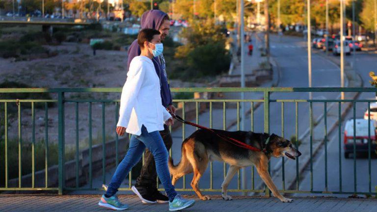 Proyecto de Ley propone dar dos días de licencia remunerada por muerte de mascotas